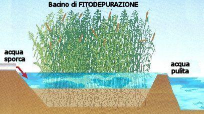 L impianto di fitodepurazione cos e i suoi vantaggi for Sistema di filtraggio per laghetto