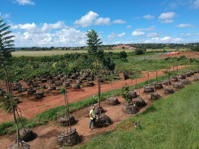 350 alberi nel giardino del nuovo ospedale pediatrico di Emergency in Uganda