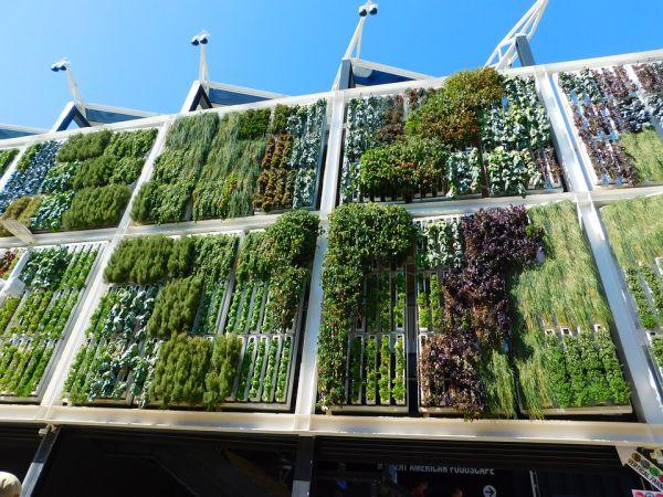 I vantaggi per il clima dei giardini verticali
