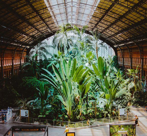 Realizzare dei giardini all'interno
