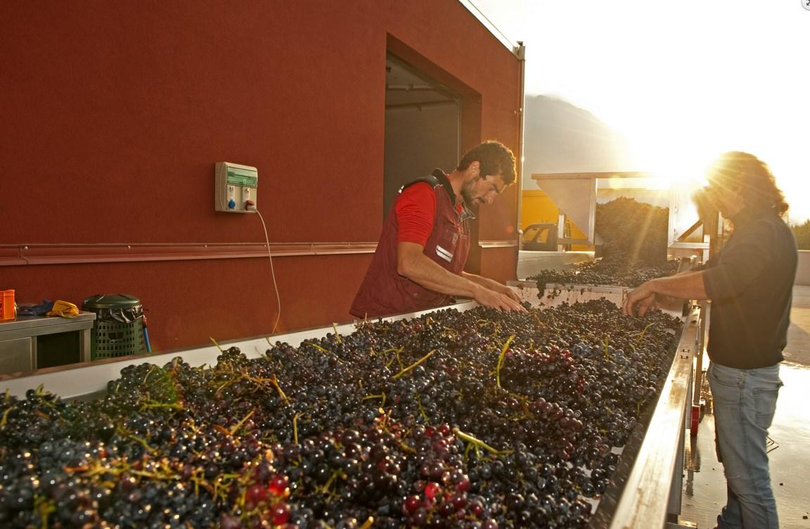 Piazza di smistamento delle uve