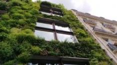 Il giardino verticale: caratteristiche e benefici ambientali