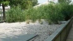 L'impianto di fitodepurazione: cos'è e i suoi vantaggi