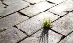 Forestazione urbana: per città sostenibili e più vivibili