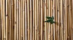 Costruire con il bambù: ecologia e resistenza