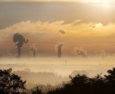 """Le soluzioni """"mangia smog"""" per combattere l'inquinamento atmosferico"""