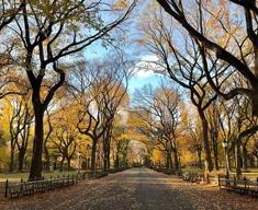 I parchi urbani: un aiuto per l'ambiente e per il benessere dei cittadini