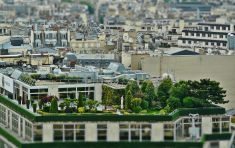 Cosa sono i Roof Garden: trasformare le città in luoghi sempre più verdi