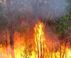 """L'Australia brucia come una """"fornace"""" accesa dai cambiamenti climatici"""