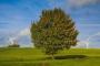 Il GSE ha aggiornato il contatore rinnovabili non fotovoltaiche