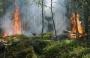 Il Sud Italia brucia, i danni per l'ambiente forse irreparabili