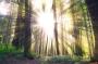 Una proposta del Parlamento Europeo per limitare la deforestazione e rispettare gli accordi di Parigi per il clima