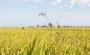 RiceHouse: il riso come risorsa edilizia del futuro