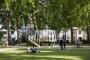 Coworking eco-sostenibili, TreeXOffice a Londra