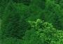 A Mantova il Forum mondiale per la forestazione urbana