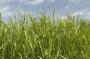 Le bioenergie guideranno la crescita delle rinnovabili al 2023?