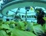 Il Giardino di Nemo