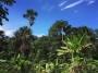 L'Amazzonia ha perso la sua foresta al ritmo del 300% in un mese, più 100% in un anno