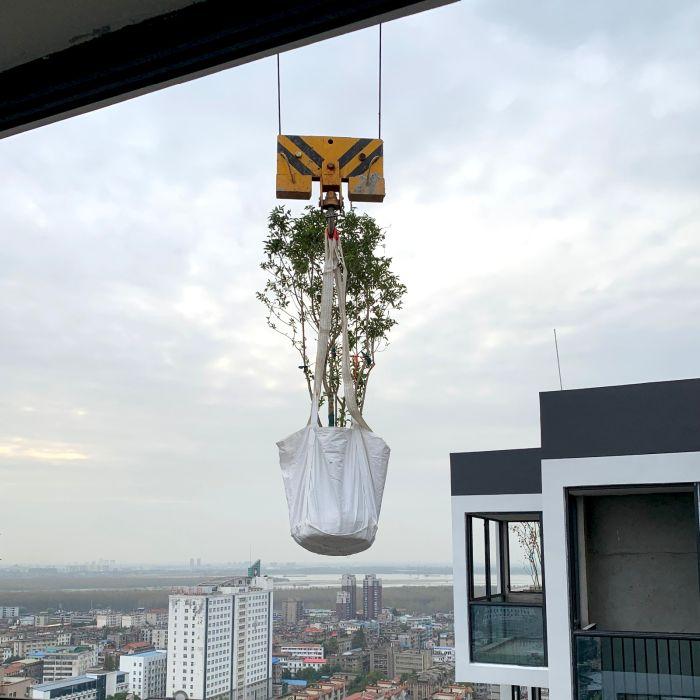 La gru che ha portato il Osmanthus fragrans al 25° piano del Bosco verticale di Huanggang