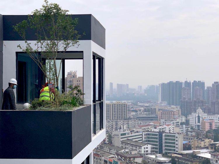 L'Osmanthus fragrans posto al 25° piano del Bosco verticale di Huanggang