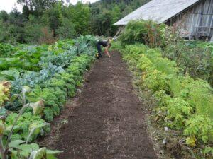 Agricoltura urbana: i vantaggi ambientali e sociali degli orti in città