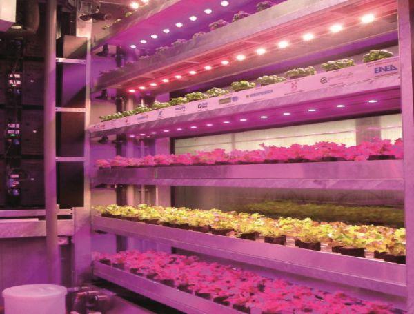 La Vertical Farm per un uso efficente delle risorse