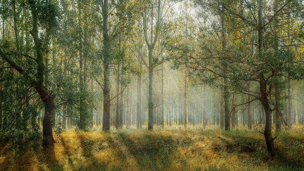 La giornata della natura dedicata alle foreste