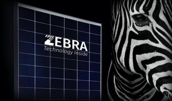 Zebra, il nuovo modulo fotovoltaico con tecnologia IBC