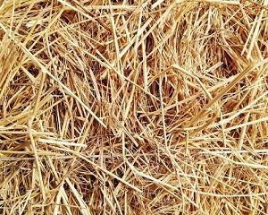 Rice House: alimentare l'economia circolare con la paglia di riso
