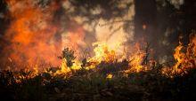 Incendi e siccità: l'estate che mette in ginocchio il Paese