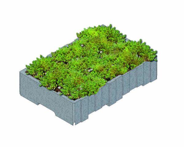 Nuovo sistema per tetto verde Derbisedum
