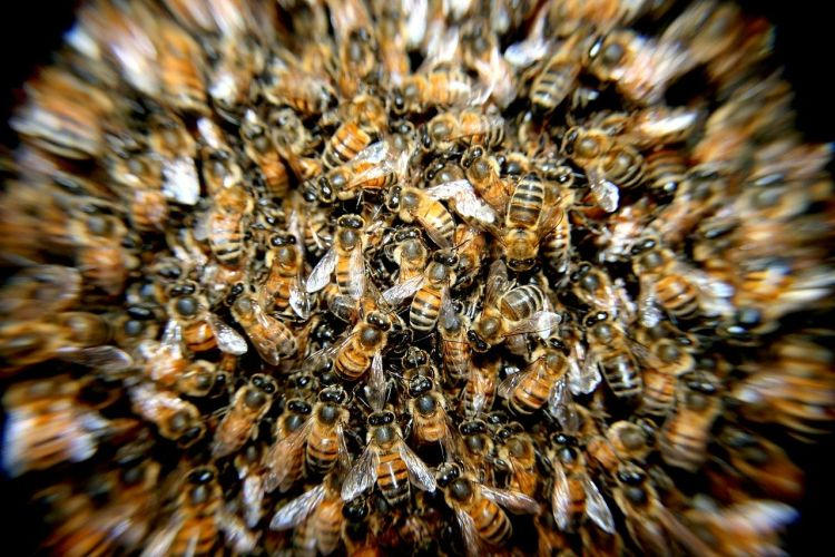 Il buon lavoro delle api per gli ecosistemi