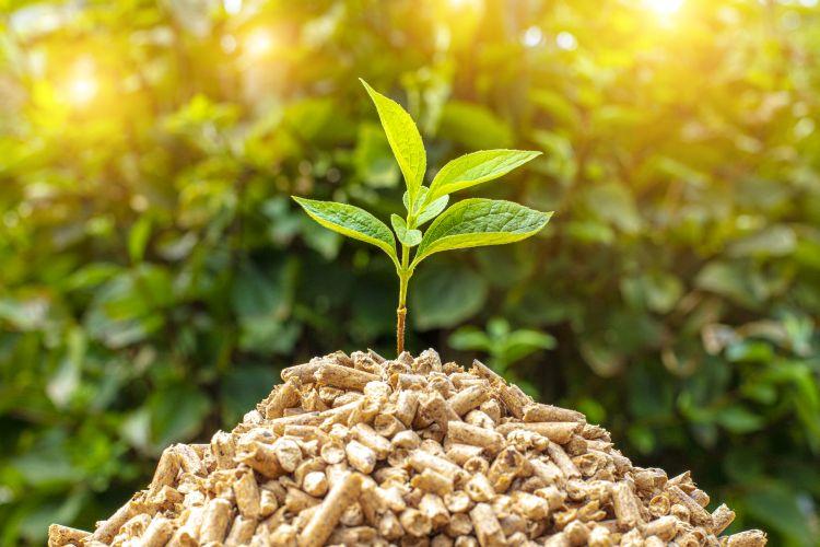 DL Rilancio, chiesto il reverse change per i prodotti di pellet di legno