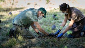 Forestami, tre milioni di piante entro il 2030