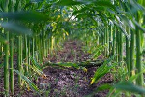BECCS: a che punto è la cattura e sequestro di CO2 dalla biomassa