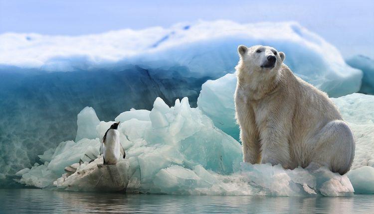 Surriscaldamento: A rischio di estinzione l'orso polare