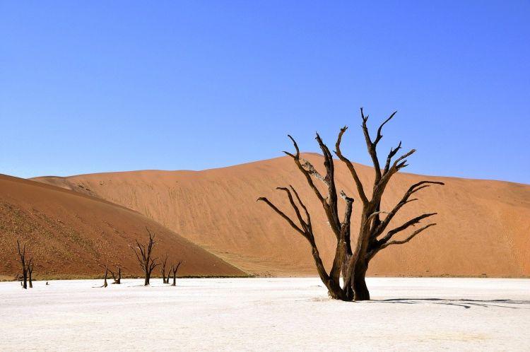Emergenza climatica: un pericolo per la pace