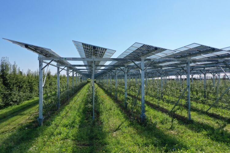 """Progetto agrivoltaico in Germania """"APV-Obstbau"""" di BayWa r.e. e Fraunhofer ISE"""