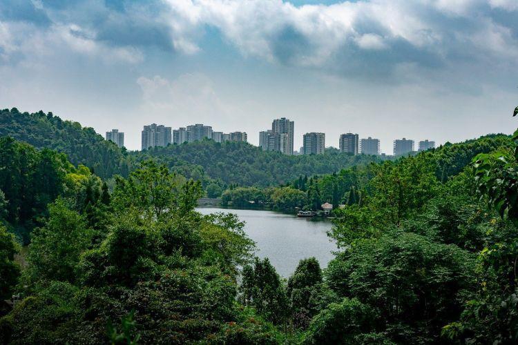 Forestazione urbana, pubblicato l'avviso pubblico per il finanziamento dei progetti