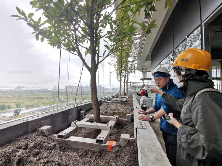 Primi alberi piantumati nel Bosco verticale di Nanjing in Cina