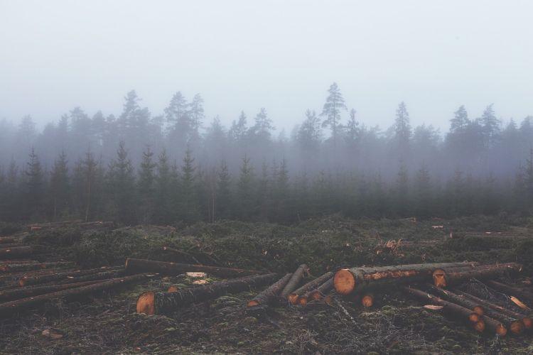 La deforestazione ha un effetto drammatico sul clima