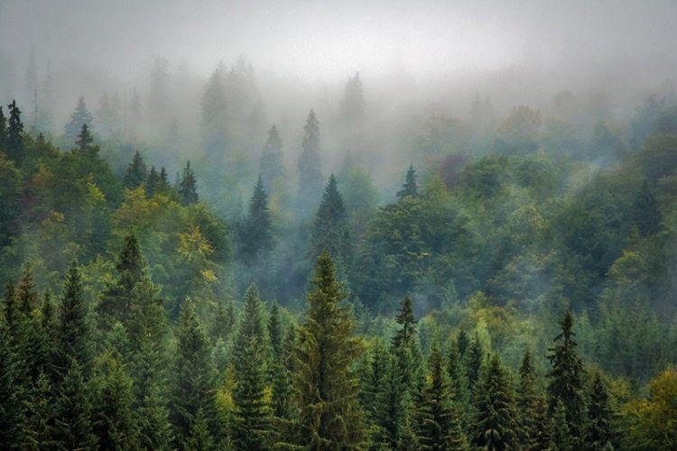 Il ruolo che svolgono le foreste nella lotta ai cambiamenti climatici
