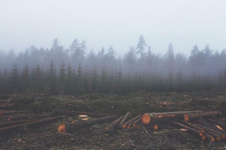 I consumi dell'Europa responsabili del 10% della deforestazione globale