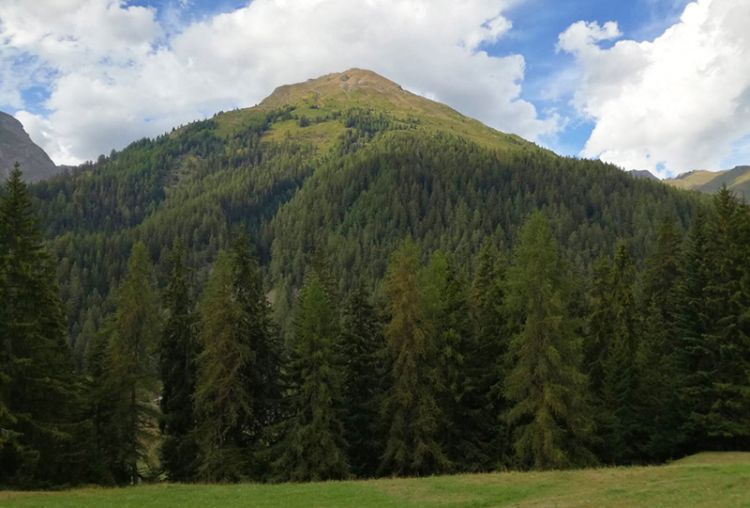 Foreste italiane: il loro futuro passa dalla gestione sostenibile e certificata
