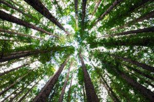 Quali sono i luoghi più green del mondo?