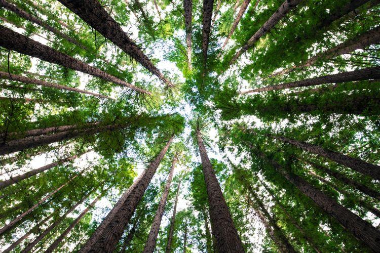 Quali sono i luoghi più green del mondo