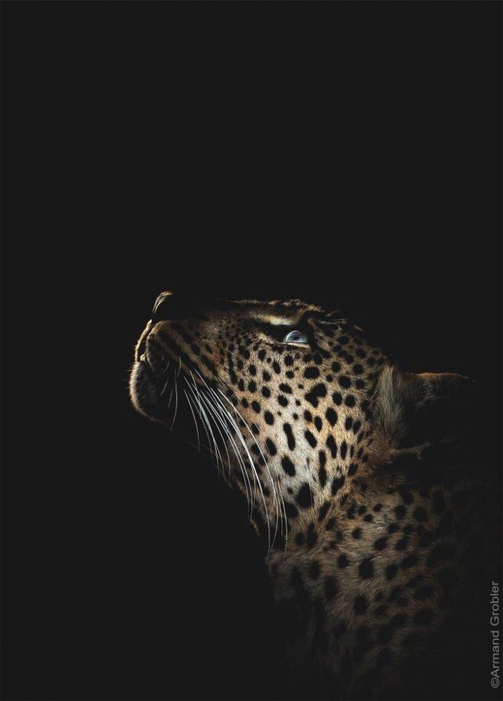 Photography for Future, foto d'autore per la riforestazione