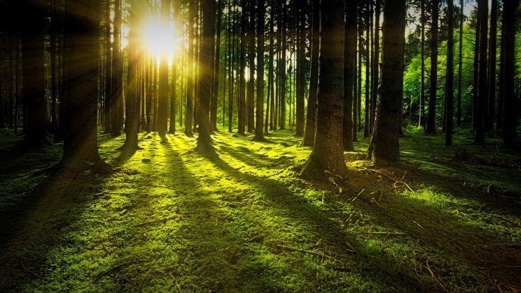 Italia seconda per foreste in Europa. Il Rapporto Symbola