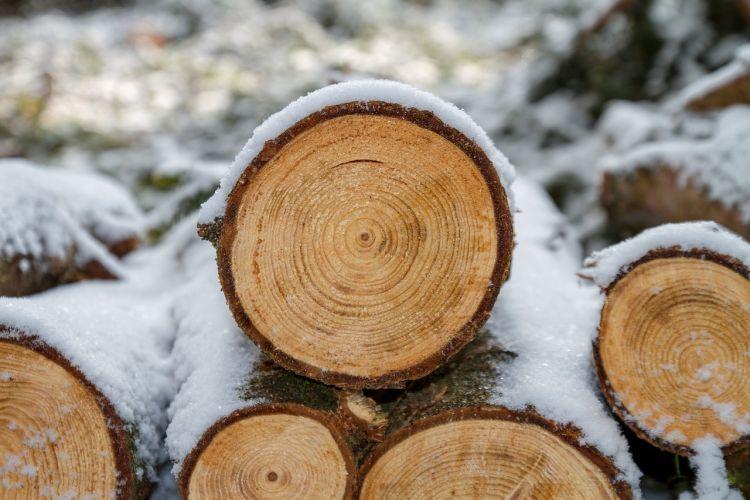 I benefici ambientali delle foreste e della gestione sostenibile del legno