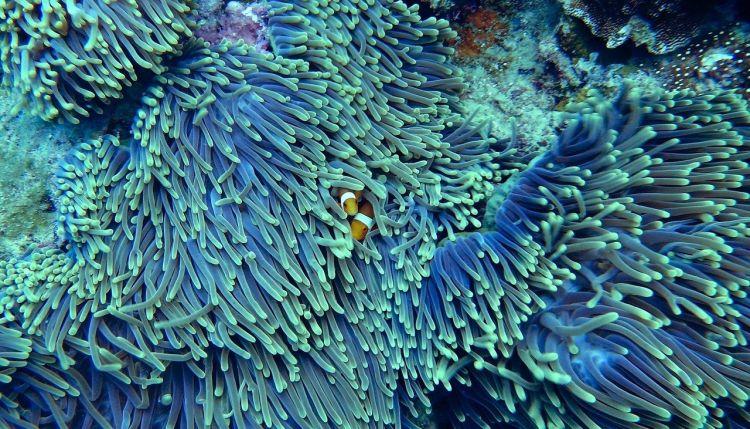 Il mondo potrebbe perdere le barriere coralline entro la fine del secolo